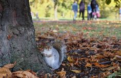 https://flic.kr/p/21fWz3D | Autumn in London