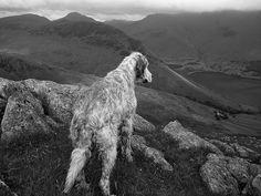 Surveying Her Kingdom | Flickr - Photo Sharing!