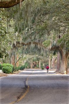 Beautiful Mossy treeline in Shipyard Plantation Hilton Head South Carolina. Hilton Head South Carolina, South Carolina Vacation, Carolina Usa, Places To Travel, Places To See, Vacation Spots, Vacation Travel, Vacation Places, Vacation Ideas