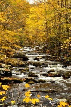 ***Stream in the fall (Smoky Mountains, North Carolina) by Betty Shelton 🍂🇺🇸 Landscape Photography, Nature Photography, Better Photography, Autumn Scenes, All Nature, Fall Pictures, Best Photographers, Nature Scenes, Beautiful World