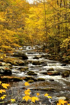 Amazing fall colors in the Smoky Mountains