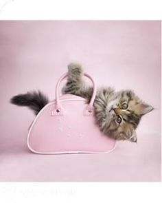 A bag lady kitty -  a Rachel Hale image