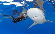 Photographer Daniel Botelho photographed this oceanic white tip shark swimming past a diver off the coast of Rio De Janeiro, Brazil picture: Daniel Botelho/ Barcroft Media