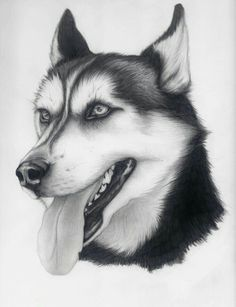 Husky by sketching in 2019 piirtäminen, piirro Pencil Art Drawings, Cool Art Drawings, Art Drawings Sketches, Husky Drawing, Cute Dog Drawing, Animal Sketches, Animal Drawings, Husky Tattoo, Dog Portraits