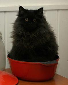 A pot of cat.
