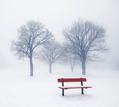In the mist ... Winter trees and park bench -- by Elena  Elisseeva on 500px