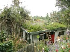 roof-garden South Africa