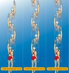 2:3 breathing pattern.  Is it a better way to breathe?  See image of swimmer at right.  Progress from single side to bi-lateral to a 2:3 bi-lateral pattern.