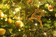 #gold #christmas #xmas #christmastree #christmaslights