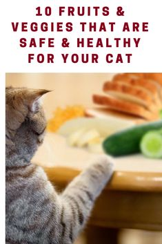 10 Fruits & Veggies That Are Safe & Healthy For Your Cat.  #petsworld #cats #catholic #caturday #cute #animals #safetytips #healthy #tips