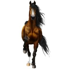 Get lucky, Pferd Andalusier Rotbrauner #11745144 - Howrse