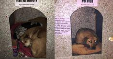 A catarinense Bruna Uncini estava próxima de sua casa quando avistou, num dia frio, vários cachorros amontoados tentando se aquecer em uma calçada.
