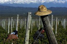 Wine Tour Mendoza