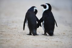 Cute and Deadly Animals in the Air: Penguins and Spiders, Oh My! - SmarterTravel