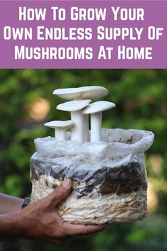 How to Grow Your Own Endless Supply Of Mushrooms At Home - You can grow all sorts of weird, wonderful and delicious mushrooms at home. Edible Wild Mushrooms, Garden Mushrooms, Stuffed Mushrooms, Growing Veggies, Growing Plants, Edible Garden, Vegetable Garden, Container Gardening, Gardening Tips