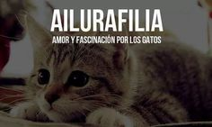 Ailurafilia amor a los gatos Weird Words, New Words, Rare Words, Cool Words, Potpourri, Spanish Words, Magic Words, Cat Quotes, Sweet Words