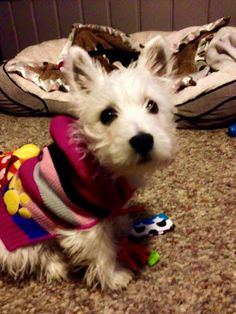 It's to cold to go outside, but do you like my new sweater.... from a FB account (Please Do Not Change This)