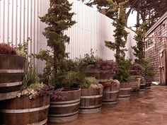 Upcycled Chic - This garden has a combination of upcycled items like wine barrels and corrugated steel.