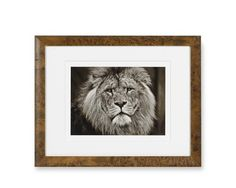 Safari Animals with Burled Wood Frame, Lion...collage of black and whites with natural frames for dining room