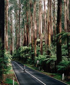 Share your photos with us and we will post them in our account. Apply for a feature following the link in our bio: @worlderlust  #worlderlust 📍 Black Spur, Victoria, Australia. Pic by: @noeldxng Tag who you'd go here with.