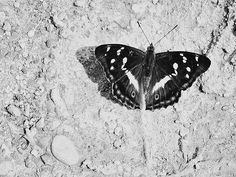 photo animals | free download photobank of black and white photos