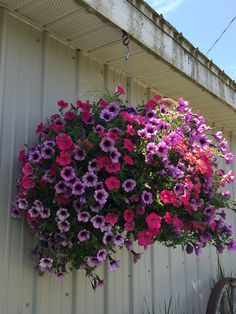 Lantana, Superbells and Petunias on east died of garage
