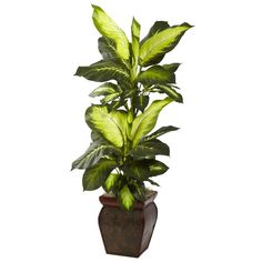 Nearly Natural Nearly Natural Golden Dieffenbachia Floor Plant in Planter