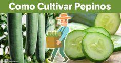 Los pepinos tienen una composición de 90 a 95 % agua, pero aun asi proporcionan una amplia gama de nutrientes valioso, incluyendo vitaminas A, B, C y K ,sílice, fibra y mucho, mucho más. http://articulos.mercola.com/sitios/articulos/archivo/2017/05/14/como-cultivar-pepinos.aspx?utm_source=espanl&utm_medium=email&utm_content=art2&utm_campaign=20170514&et_cid=DM143767&et_rid=2003194872