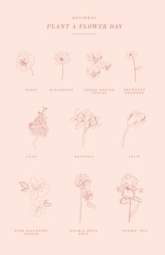spring flowers to plant | cute spring graphic