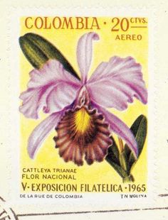 Colombia - Orchids on stamps theme, National Philatelic Exhibition. Orchid Tattoo, Cattleya Orchid, Cali Colombia, Flower Stamp, American Traditional, Cute Tattoos, Traditional Tattoo, Postage Stamps, Earthy