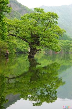 Jusan Pond in Cheongsong County ~ Seoul, South Korea