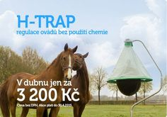 Timely installation at a bargain price Horse Fly, Studios, Horses, Animals, Chemistry, Animales, Animaux, Animal, Animais