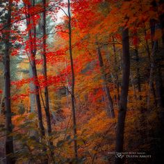 Photograph Fortissimo by Dustin Abbott on - Autumn forest Autumn Day, Fall, Early Autumn, Autumn Forest, Ontario, Beauty Planet, Lightroom 4, Nature View, Pictures Images