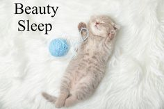 """""""Beauty Sleep"""" is One of the Best Age Defying Secrets! Discover the importance of Beauty Sleep. Cute Little Kittens, Cute Baby Cats, Ginger Kitten, Ginger Cats, Cute Cat Sleeping, Cute Ginger, Grey Kitten, Kitten Photos"""