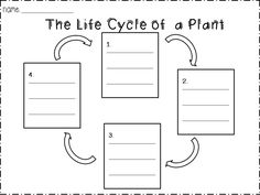 Worksheet Plant Life Cycle Worksheet activities comprehension and the ojays on pinterest