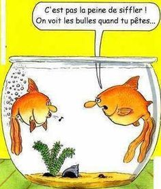 Funny toilets comedy in a fish farting cartoon with aquarium bubbles. A humor picture and funny flatulence comic strip bathroom joke.