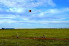 Hot Air Balloon Safari early morning in Maasai Mara, Kenya Tourism In Kenya, Kenya Travel, Africa Travel, Travel Tourism, South Africa Safari, Tanzania Safari, Kenya Africa, East Africa, Best Places To Travel
