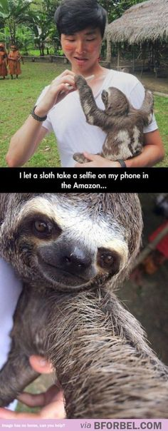 But First, Let Me Take A Sloth-fie…
