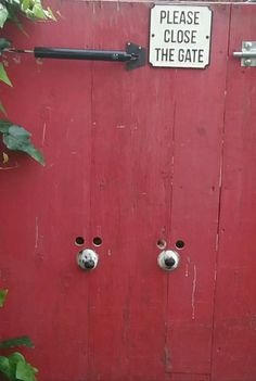 """Two nosy dogs keep both beady eyes (and an inquisitive nose each) on the neighbourhood comings and goings."""