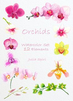Watercolor Flowers Clipart Orchids Hand Painted by JuliaSpiri Inexpensive Wedding Flowers, Rustic Wedding Flowers, Wedding Flower Arrangements, Watercolor Flowers, Watercolor Paintings, Watercolors, Watercolor Wallpaper, Orchid Tattoo, Collage Sheet
