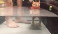 Buoyant Cat