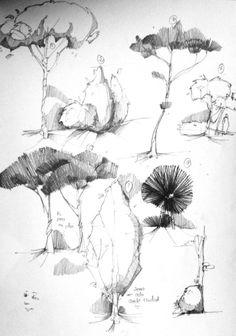 Studiu copaci