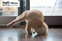 Yoga kitty finds her inner peace <3
