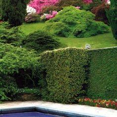 Garden of the Villa, Pietro Porcinai