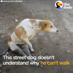 Street Dog Rescued By Kind Rescued Team The Rescued team finally succeeded ♥️❤️ Cute Puppies, Cute Dogs, Dogs And Puppies, Doggies, Cute Funny Animals, Funny Cute, Rescue Dogs, Animal Rescue, Animals And Pets