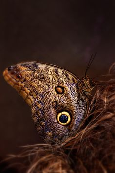 aesthetic brown A Faerie's Heart Beats Fierce And Free aesthetic beige The Magic Faraway Tree, Brown Aesthetic, World Of Color, Brown Beige, Brown Shades, Beautiful Butterflies, Beautiful Bugs, Amazing Nature, Vintage Girls