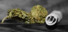 #weed #bnw weed black white
