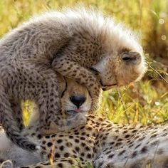 Checkout this feel-good slideshow from the Huffington Post. It features 30 photos of animal parents with their babies - filled with warm moments to inspire your day!