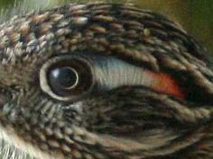 nature – Page 3 – The Eye Si(gh)t Greater Roadrunner, Texas Animals, State Birds, Road Runner, Birds Of Prey, The Ranch, Tucson, Bird Feathers, Beautiful Birds