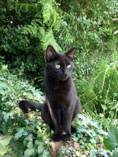 SILK est un chat très dynamique, qui a besoin de stimulation. Il aime ses compagnons félins, beaucoup moins les chiens. Son histoire: il a été trouvé dans le moteur d'une voiture, et non réclamé malgré affiches, annonces, etc..RESCUE BRETAGNE(Morbihan) 0679353715